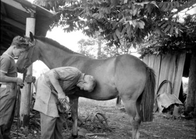 P.J.C shoeing a horse for Ian Knowles